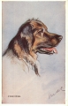 uk-hund-film-star-valentines-uz-1013