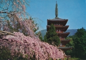 japan-kyoto-daigoji-temple-18-0613